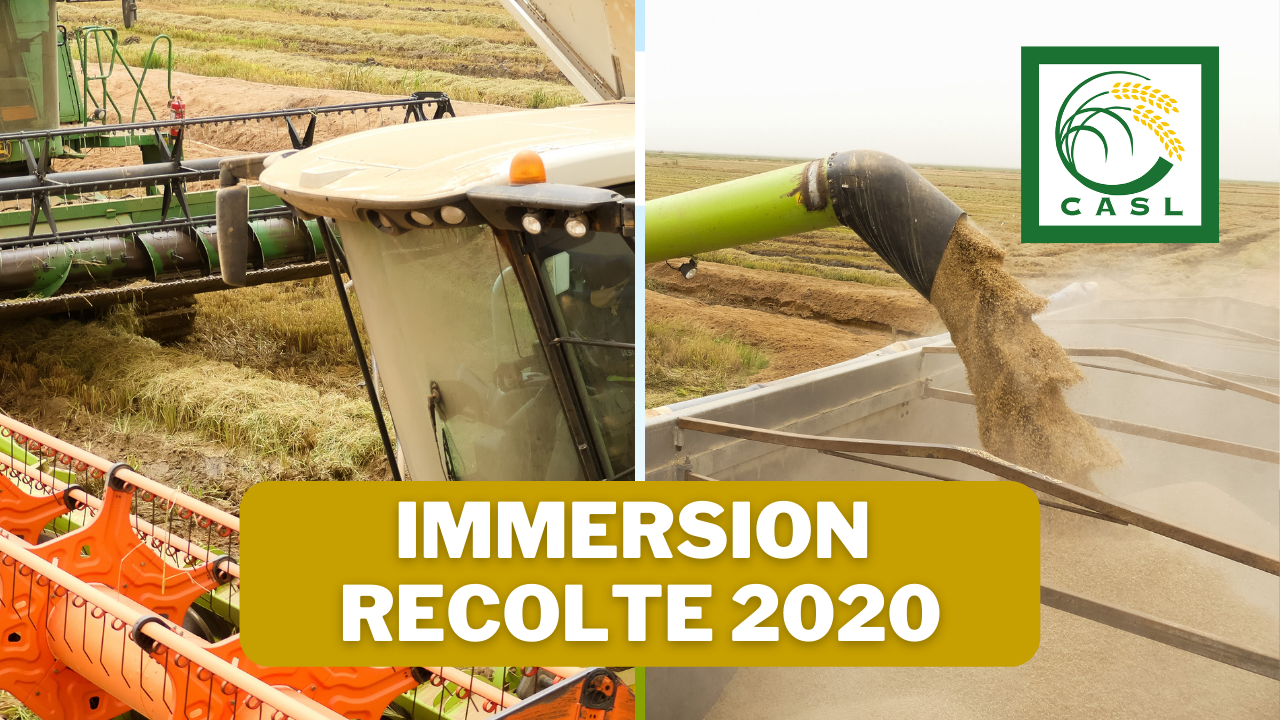Immersion à la récolte 2020